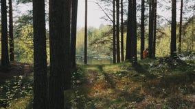 Deux amis d'hommes marchant sur la forêt le long du lac le jour ensoleillé banque de vidéos