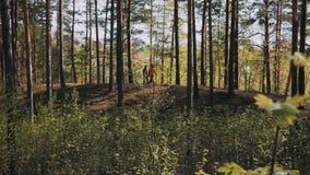 Deux amis d'hommes marchant sur la voie de forêt le jour ensoleillé banque de vidéos