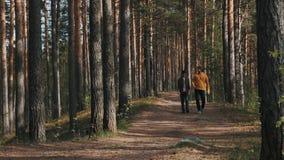 Deux amis d'hommes marchant sur le sentier piéton de forêt le jour ensoleillé clips vidéos