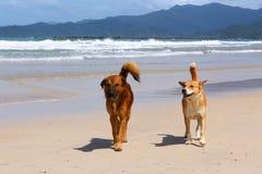 Deux amis de crabot Photo stock