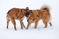 Deux amis de crabot dans la neige Photos libres de droits