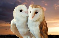 Deux amis de hiboux Photographie stock libre de droits