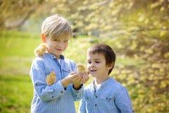 Deux amis en parc, jouant avec les poussins nouveau-nés mignons Photos stock
