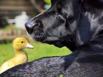 Deux amis exceptionnels Image libre de droits