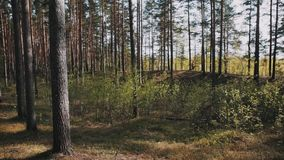 Deux amis masculins marchant sur la voie de forêt le jour ensoleillé banque de vidéos
