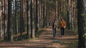 Deux amis masculins marchant sur le sentier piéton de forêt le jour ensoleillé clips vidéos
