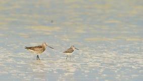 Deux amis sur un marais africain Image stock