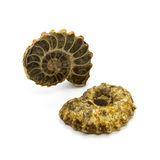 Deux ammonites Photographie stock libre de droits