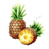 Deux ananas Illustration tirée par la main d'aquarelle, d'isolement sur le backgroundÑŽ blanc Images stock