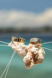 Deux anneaux de mariage placés sur le corail blanc dans le ciel Image libre de droits