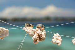 Deux anneaux de mariage placés sur le corail blanc dans le ciel Image stock