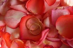 Deux anneaux de mariage sur des pétales de rose Photos stock