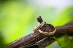 Deux anneaux de mariage sur une branche de vigne Photo libre de droits