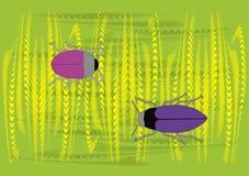 Deux anomalies différentes de couleur dans le blé Photo stock