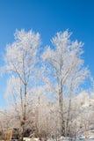 Deux arbres Image stock