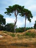 Deux arbres Images stock