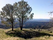 Deux arbres photo stock