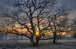 Deux arbres au lever de soleil photos stock