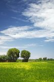 Deux arbres dans le domaine avec les nuages merveilleux Photos stock