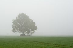 Deux arbres dans le domaine brumeux Photographie stock libre de droits