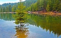 Deux arbres dans le lac Images libres de droits