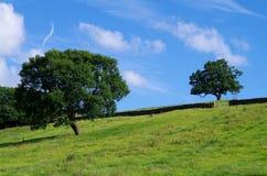 Deux arbres dans un domaine de Yorkshire Images stock