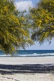 Deux arbres de mimosa font une voûte qui agit en tant qu'entrée à la plage blanche avec le bleu de la mer et au ciel à l'arrière- photo libre de droits