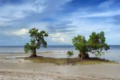 Deux arbres de palétuvier sur la plage tropicale Images stock