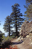 Deux arbres et un plus gras Images stock
