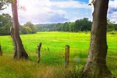 Deux arbres et un pré à l'arrière-plan Photos libres de droits