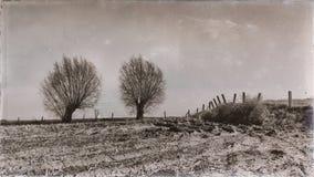 Deux arbres et une barrière dans un vintage aménagent en parc photo stock