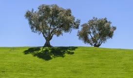 Deux arbres sur une zone Photos libres de droits