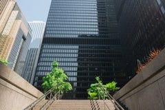 Deux arbres verts au district des affaires du centre de Toronto le jour ensoleillé image libre de droits