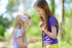 Deux babyfrogs contagieux adorables de petite fille dans la forêt d'été Images stock