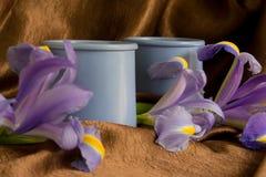 Deux bacs en céramique avec des iris Images libres de droits