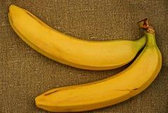 Deux bananes sur renvoyer gris Images stock
