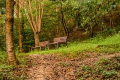 Deux bancs de parc sous la tresse Image libre de droits