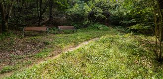 Deux bancs de parc sous la tresse Images stock