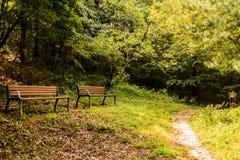 Deux bancs de parc sous la tresse Photo stock