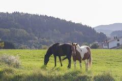 Deux beaux chevaux Photographie stock