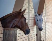 Deux beaux chevaux communiquer les uns avec les autres photos stock