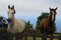 Deux beaux chevaux contre un contexte d'océan Images stock