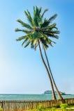 Deux beaux cocotiers grands au coucher du soleil Photographie stock libre de droits
