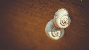 Deux beaux escargots modelés de coquilles se sont accrochés à un arbre Images stock