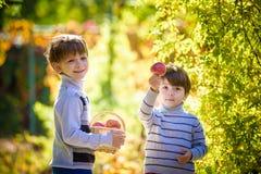 Deux beaux garçons se tiennent avec un panier avec des pommes Photographie stock libre de droits