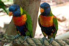 Deux beaux perroquets dans le safari photo stock