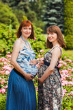 Deux belles amies de sourire de femmes enceintes Photo stock