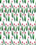 Deux belles tulipes lumineuses rouges sur un croquis sans couture de main d'aquarelle de modèle de fond blanc Images stock