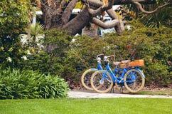 Deux bicyclettes bleues garées sous un grand arbre dans un jardin images stock