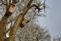 Deux boîtes d'oiseau en bois légèrement couvertes de neige image libre de droits